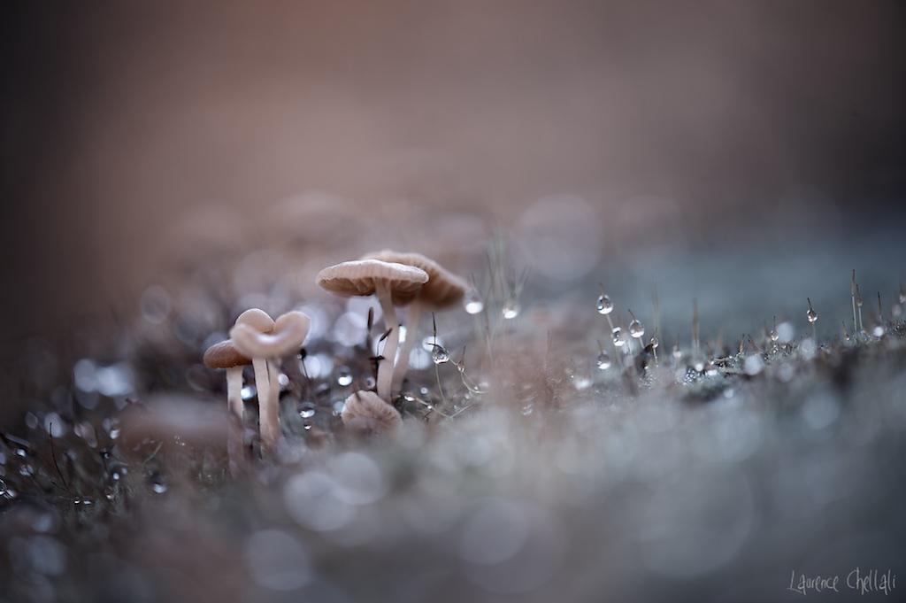 champignons1