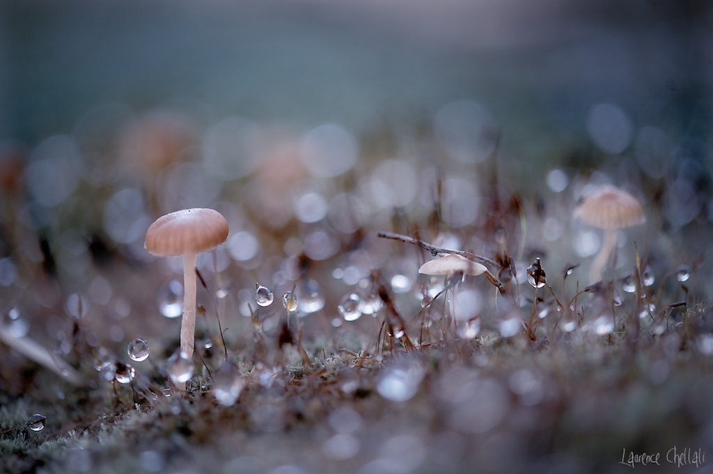 champignons2