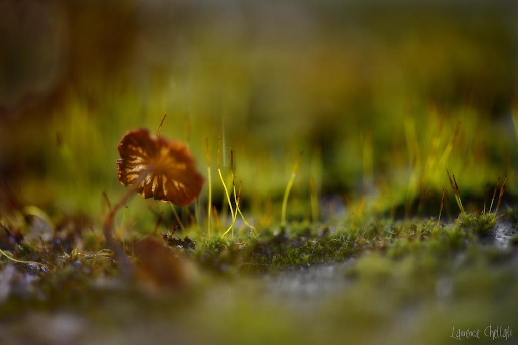 champignons5